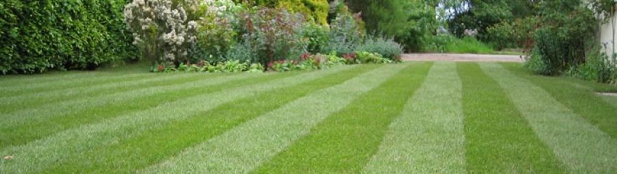 Flot græsplæne