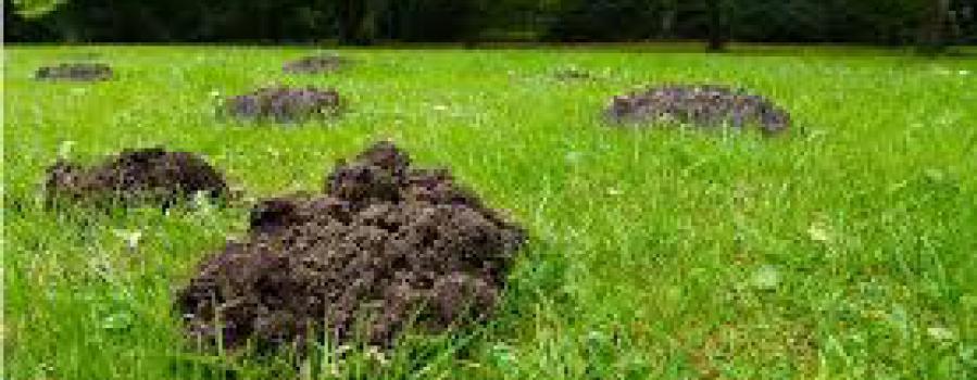 Undgå muldvarpe i haven