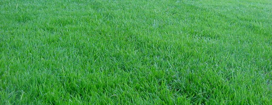 Topdressing af græsplænen