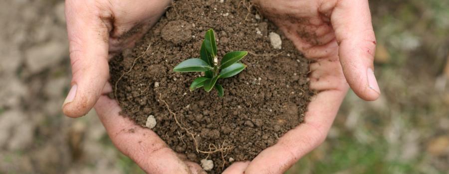 Bæredygtig have - tag hånd om haven