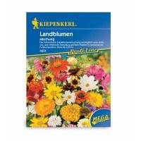 Blomsterblanding - blomsteridyl