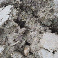 GreenBio Husdyrsgødning til økologisk dyrkning