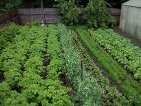 Planlæg din køkkenhave
